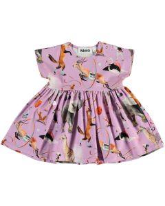 Kleid Molo  Channi 6142
